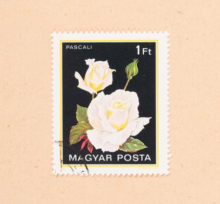 HUNGARY - CIRCA 1980: A stamp printed in Hungary shows a flower, circa 1980 写真素材