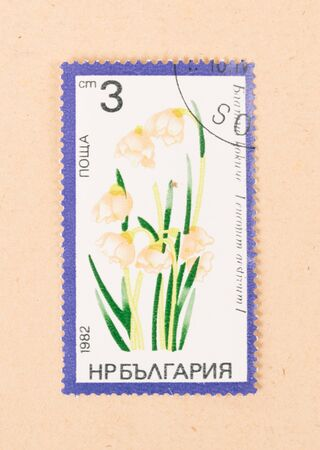 RUSSIA - CIRCA 1982: A stamp printed in Russia shows a flower, circa 1982