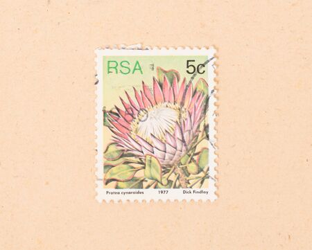 SOUTH AFRICA - CIRCA 1977: A stamp printed in South Africa shows a flower, circa 1977