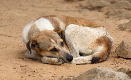 Sleepy street dog on the streets of rural Madagascar