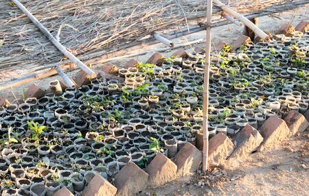 Small tree plantation in Madagascar - Let the jungle grow again