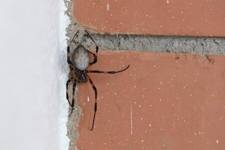 Large spider outside a bungalow in Madagascar 写真素材