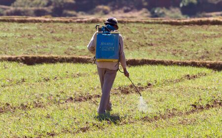 Farmer spraying pesticide to rice by insecticide sprayer in the paddy field, Madagascar