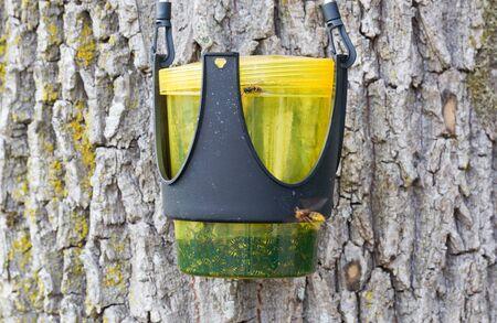 Garden wasp catcher hanging in a tree