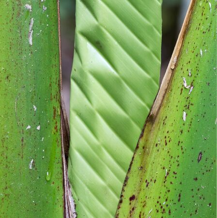 Palm Tree closeup details, special and strong tree Banque d'images - 130817630