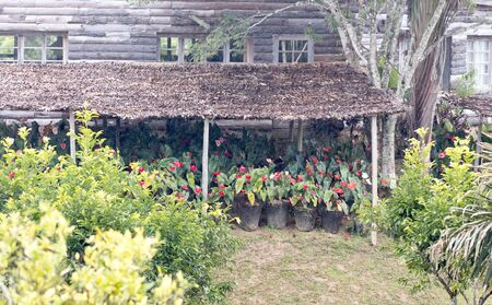 Flower plantation on Madagascar - Many flowers growing - Africa
