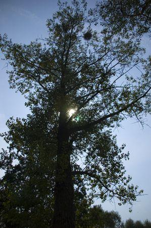 sun on blue sky hiding behind tree Stock Photo - 5703903