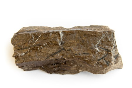 carboniferous: fossil of cambrian, ordovician graptolite detailed macro shot (monograptus) Stock Photo