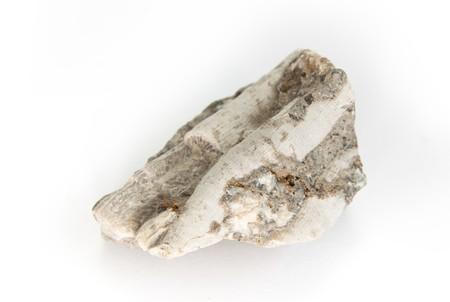 carboniferous: fossil of carboniferous coral detailed macro shot (lithostrotion)