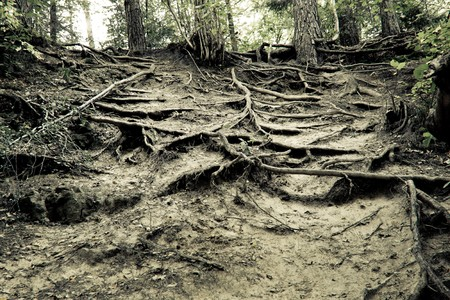 steep: roots over ground on some steep hill