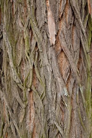 some macro shot of very old tree Stock Photo - 13582580