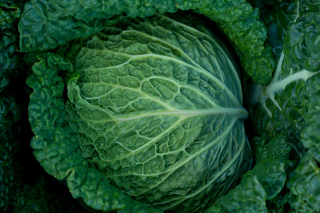 detail photo of leafs of green cabbage photo