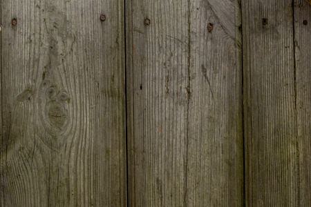 graining: detailed macro photo of old wood texture Stock Photo