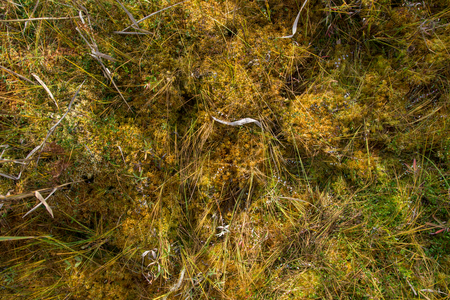 mosses: close up o mosses creating abstract natural mosaic of plants in different colors