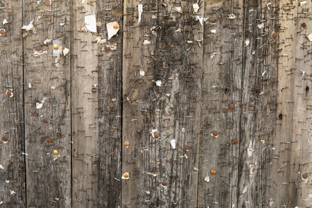 graining: abstract composition of wooden fence full of staples Stock Photo