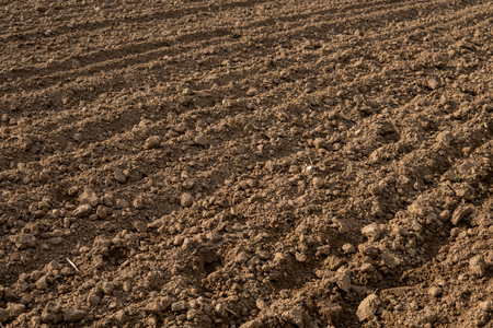 harrowing: empty field after harrowing during early spring Stock Photo