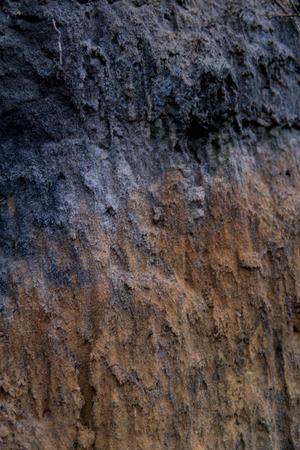 Close up del terreno podzol con strati visibili sulle sabbie Archivio Fotografico - 92260264
