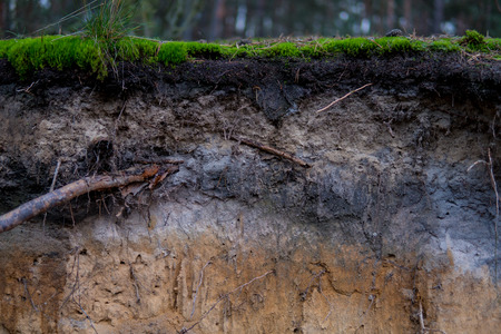close up of podzol soil with visible layers on sands