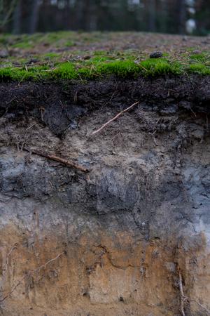 gros plan d'un sol de podzol avec des couches visibles sur le sable