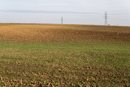 rural landscape with small cereal growing on ground at the beginning of spring Stock Photo