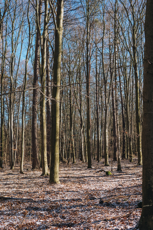 Stellario holosteae type of  temperate broad-leaf forests with hornbeam trees during winter in Poland