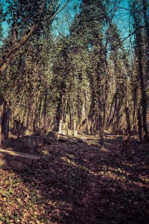path through old jewish cemetary in Czestochowa in Poland