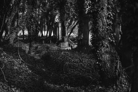 black and white photo of old jewish cemetery in the city of Czestochowa in Poland Reklamní fotografie