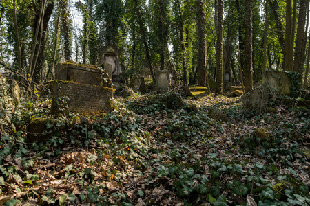 old matzevah covered with ivy on jewish cemetery in the city of Czestochowa in Polnad Reklamní fotografie