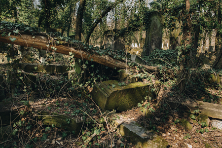 old matzevah covered with ivy on jewish cemetery in the city of Czestochowa in Polnad Banco de Imagens