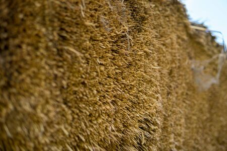 close up of a straw used to construct a thatched roof
