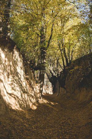 bottom of a most famous gully landform in Kazimierz Dolny called Korzeniowy dol Reklamní fotografie