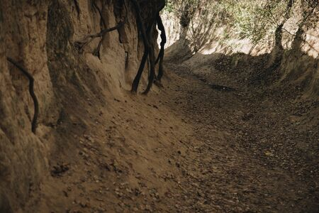 roots of trees inside of a gully landform formed in loess rocks