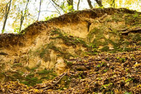 wall from a loess rock partially covered with moss and leaves