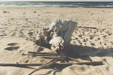 old white trunk on sandy beach next to the sea during summer