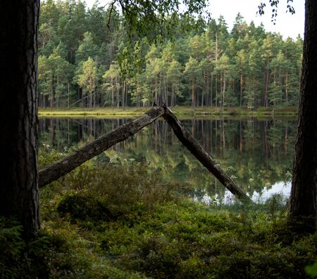 shore of a dystrophic lake with calm surface inside of a pine forest