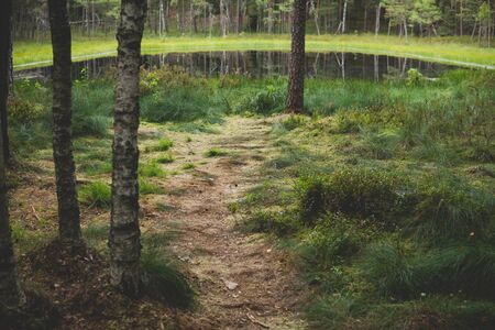 path on a shore of a dystrophic lake with calm surface inside of a pine forest Reklamní fotografie