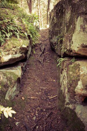 ground path between sandstones in nature Reserve Rocks in Krynki in ÅšwiÄ™tokrzyskie Voivodeship in Poland