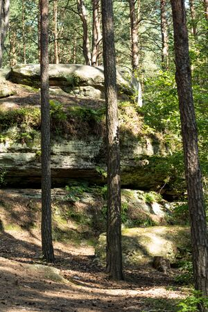 landscape with a large sandstones inside of a forest in nature Reserve Rocks in Krynki in ÅšwiÄ™tokrzyskie Voivodeship in Poland