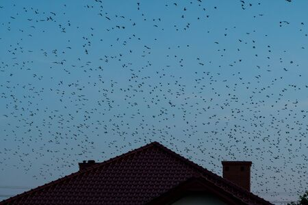 a flock of birds flying over houses during evening