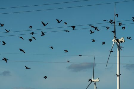 a flock of black birds flying in front of wind turbines