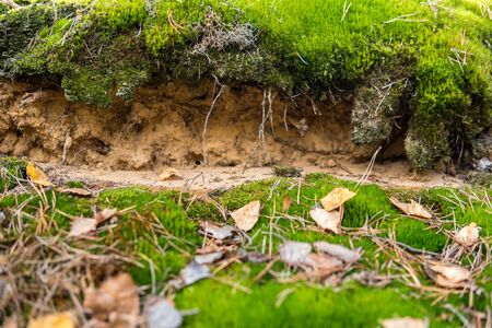 detail of a podzol soil with visible topsoil and eluvial layers Archivio Fotografico