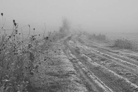 weeds and herbs covered with frost growing next to ground road disappearing in a fog