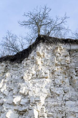 trees growing at the top of limestone outcrop near Solec Kujawski in Poland