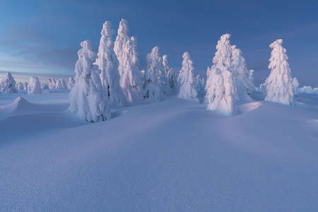 View of forest covered with snow