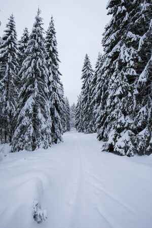 Cold day in snowy winter forest. Alps in extreme cold and frosty winter conditions. Extreme cold and deep snow. Foggy winter weather. Beautifull day