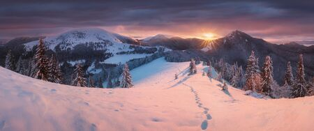 Beautiful winter panorama with fresh powder snow. Landscape with spruce trees, blue sky with sun light and colorful clouds and high mountains on background Christmas time and Happy New Year in ski resort.