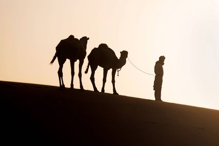 Bedouin and camels on way through sand dunes. Beautiful sunset with caravan in Sahara desert, Morocco, Africa
