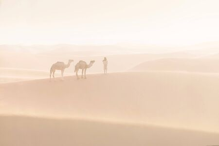 Bedouin and camels in the desert. Nomad leads a camel caravan in the Sahara during a sand storm, Morocco, Africa Silhouette man and picturesque background nature concept. Stock Photo