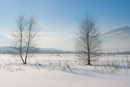 Winter scene with two trees photo
