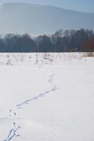 spoor: Spoor on snowy field
